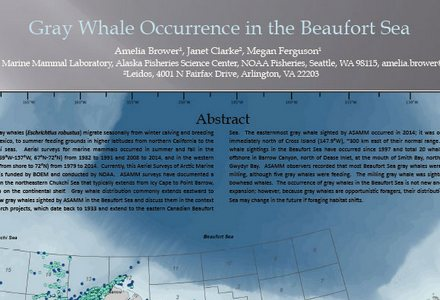Gray whale beaufort